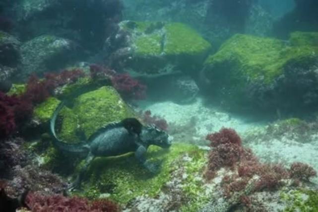 Cesimagesexceptionnelles ont été captées en octobre aux îles Galapagos, mais... (PHOTO TIRÉE DE LA VIDÉO)