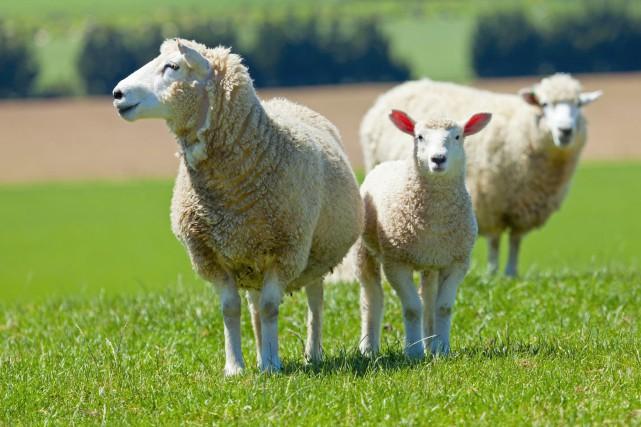 Seriez-vous prêt à renouer avec l'agriculture en voyant la vie animale... (Photo courtoisie)