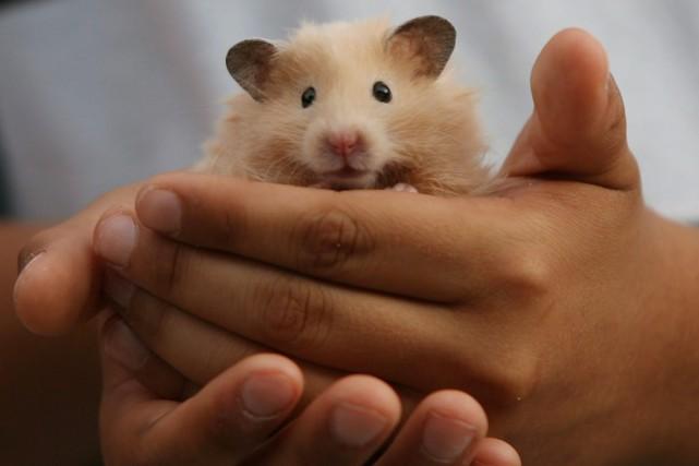 Une associée chez PetSmart, une animalerie de Toronto,... (Photo La Presse Canadienne)