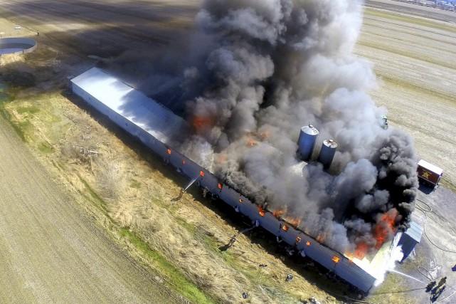 Quelque 800 porcs ont péri dans cet incendie.... (Érick Beaupré, collaboration spéciale)