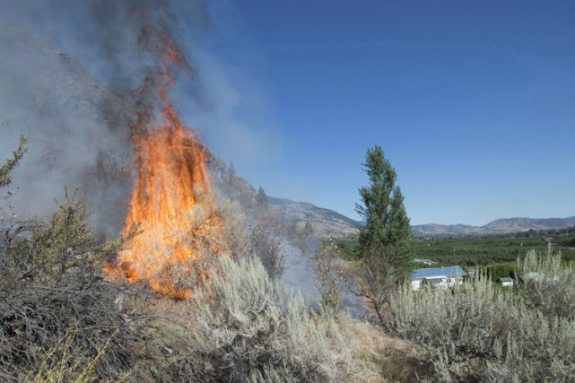 Des feux de forêt ont endommagé de nombreux... (ARCHIVES PC)