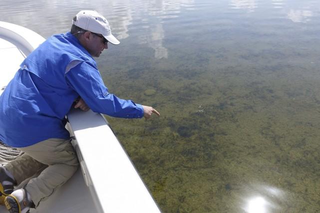 Steve Davis, de la Fondation Everglades, montre les... (AFP)