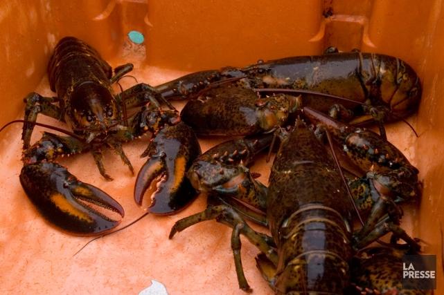 Environ 140 des 163homardiers gaspésiens prennent la mer... (Archives La Presse)