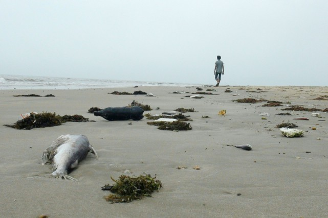 Un homme marche au milieu de poissons morts... (PHOTO ARCHIVES AFP/STR)