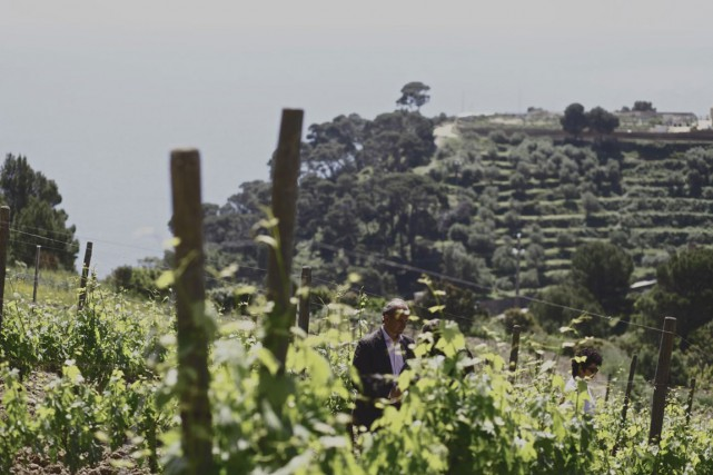 C'est en 1999 que les premières vignes de... (PHOTO FOURNIE PAR FRESCOBALDI)
