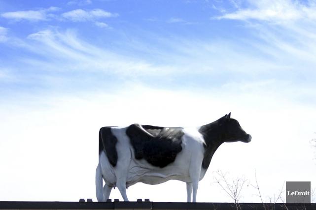 Albertine sera bientôt orpheline, victime d'une autre vacherie... (Etienne Ranger, LeDroit)