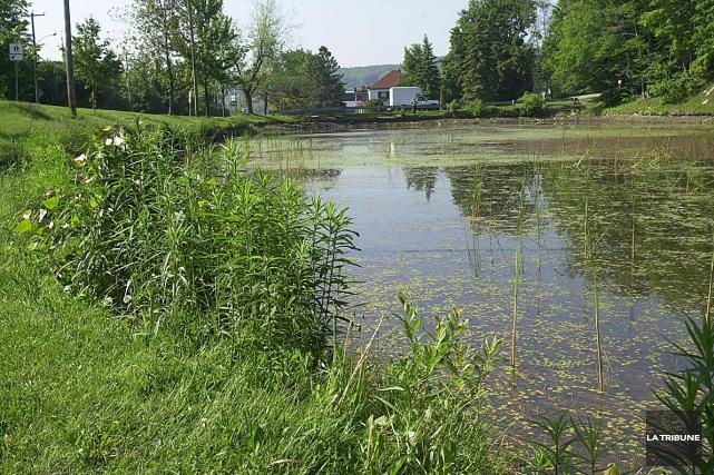 L'étang du domaine Howard ne sera pas nettoyé... (Archives, La Tribune)