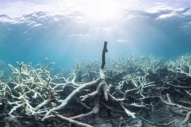 D'autres scientifiques avaient annoncé la semaine dernière que... (PHOTO ARCHIVES AFP)