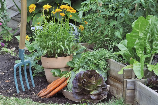Quels légumes mettrez-vous dans votre potager cet été?... (Photo 123rf/Bouvier Sandrine)