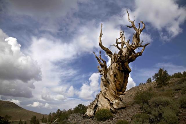 L'âge:4847 ans (123RF/Heather Snow)