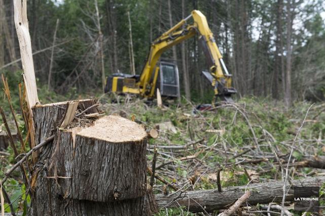 L'industrie canadienne du bois veut réduire ses émissions... (Archives La Tribune)