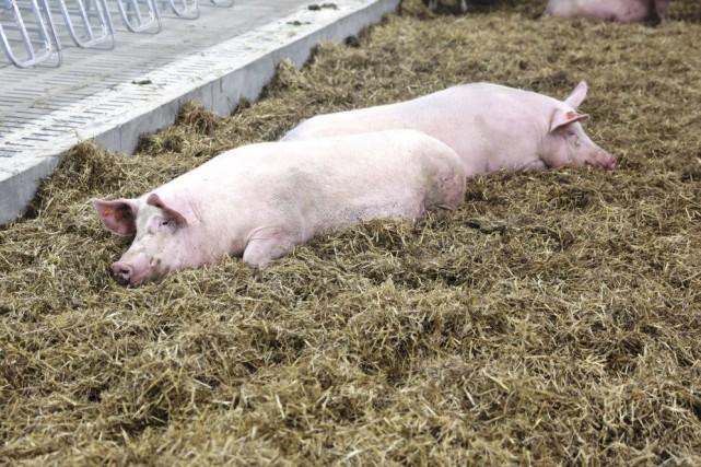 Entreprise spécialisée dans la transformation du porc, DuBreton s'engageait,... (fournie par DuBreton)