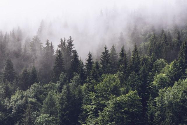 Pourquoi pensez-vous que l'industrie forestière a tellement de... (skdesign, 123RF)