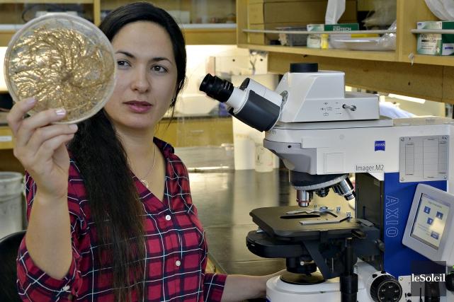 Les travaux de Salma Taktek, ingénieure en biotechnologie,... (Photothèque Le Soleil, Pascal Ratthé)