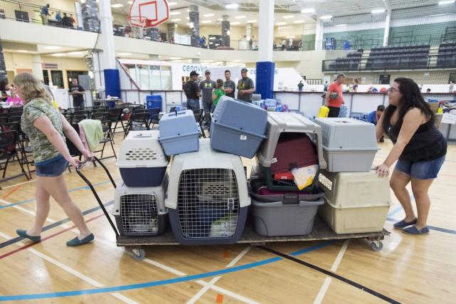 Des bénévoles transportent des cages pour les animaux... (La Presse Canadienne)