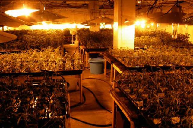 Les policiers ont saisi 56livres de marijuana emballée... (PHOTO FOURNIE PAR LA COUR)