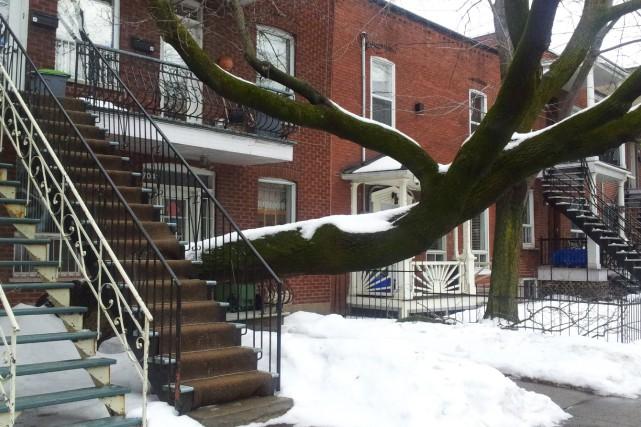 Cet arbre s'est enraciné tout près de la... (PHOTO FOURNIE PAR PATRICK SAUVÉ, INSPECTEUR EN BÂTIMENT)