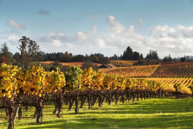 Des vignes de chardonnay prospèrent au domaineKistler dans... (Photo Craig Lee, archives The New York Times)