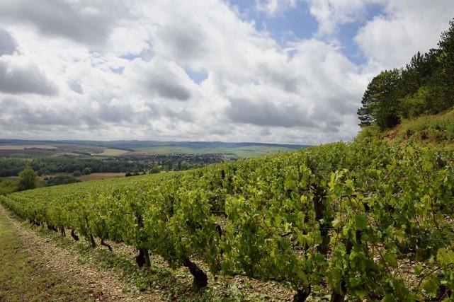 Une partie du vignoble chablisien, dans l'Yonne, a été touchée vendredi soir... (PHOTO ERIC FEFERBERG, ARCHIVES AFP)