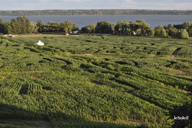 Annuellement, l'Union des producteurs agricoles (UPA) récolte environ... (Photothèque Le Soleil)