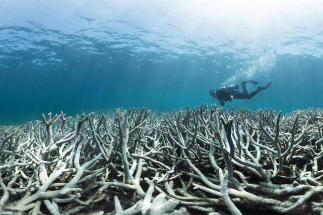 Les coraux peuvent mourir d'une exposition trop forte aux particules de... (PHOTO AFP)