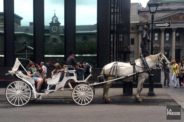 Монреаль вводит запрет на прогулочные конные экипажи по городу