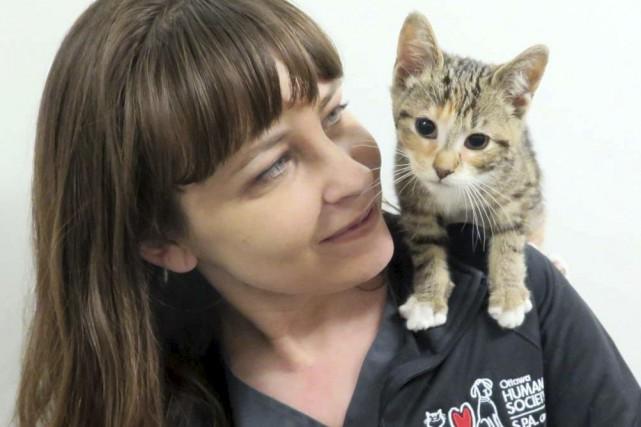 Cette petite chatte, baptisée Daisy, est extrêmement chanceuse... (Courtoisie, Ottawa Humane Society)