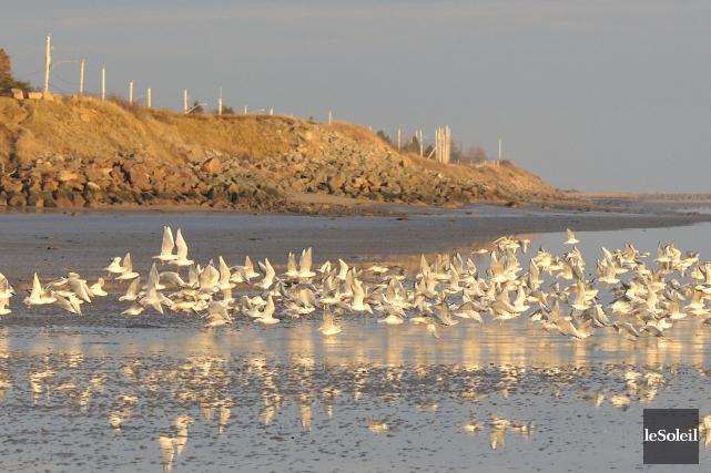 Des 1154 espèces actuellement répertoriées en Amérique du... (Photothèque Le Soleil)