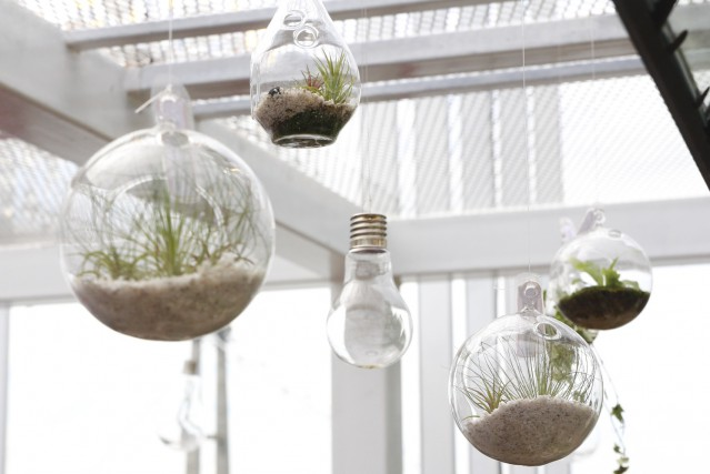 mini terrariums et kokedamas d corations vivantes larry hodgson horticulture. Black Bedroom Furniture Sets. Home Design Ideas
