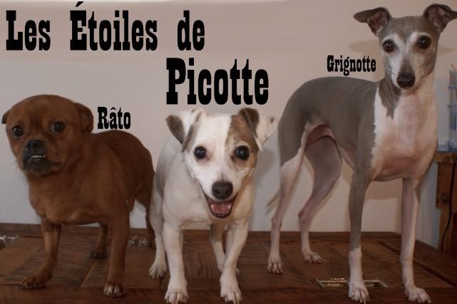 Râto, le nouvel ami de Picotte et Grignotte,... (Photo Le Progrès-dimanche, Mélissa Viau)