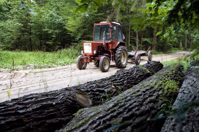 La forêt de Bialowieza est la plus ancienne... (PHOTO LUDMILA MITREGA, ARCHIVES AFP)