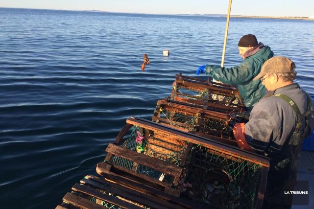 Un énorme privilège, aux îles de la Madeleine, c'est de déguster le homard... (La Tribune, Jonathan Custeau)