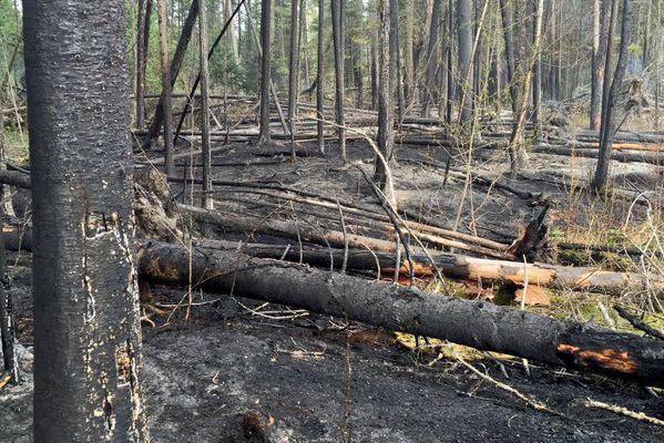 Un feu de broussailles initié à la limite... (Service de protection contre l'incendie de Québec)