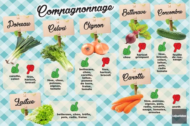 Saviez-vous que les légumes préfèrent la compagnie de certaines plantes à... (Photomontage Le Quotidien)