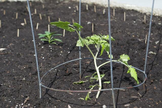 Vous avez un collègue qui a eu la brillante idée de jardiner au travail? Vous... (Photo Mélissa Bradette)
