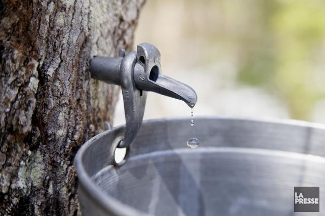 La production de sirop d'érable au Québec a atteint cette année un sommet:... (Archives La Presse)