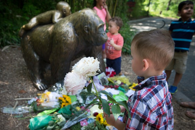 Au zoo de Cincinnati, un garçon pose une... (Archives AP)