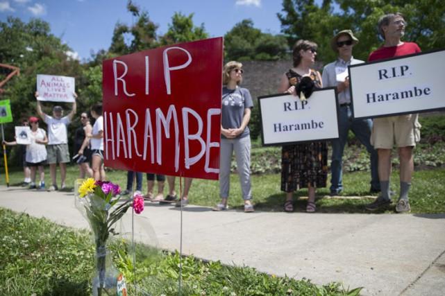 Desmilitants pour les droits des animaux se sont... (PHOTO AP)