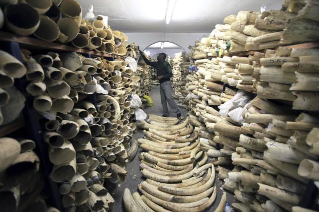 Un employé des parcs nationaux du Zimbabwe dans... (AP, Tsvangirayi Mukwazhi)