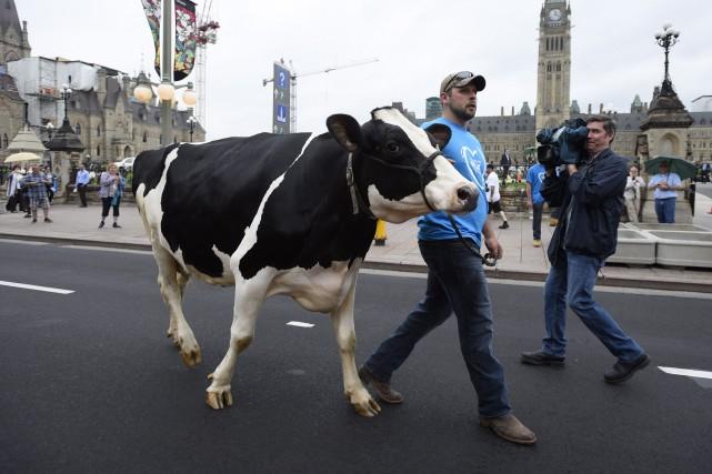 Vaches et tracteurs ont pris d'assaut la colline... (La Presse Canadienne)