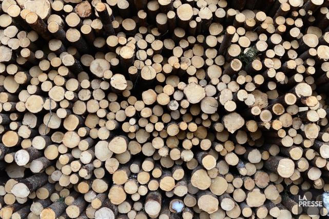 Le ministère des Forêts, de la Faune et des Parcs annonce la plus importante... (Archives La Presse)