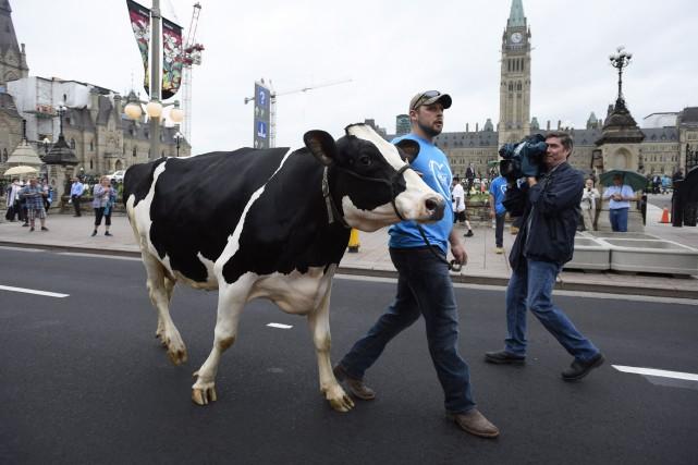 Vaches et tracteurs ont pris d'assaut la colline... (Justin Tang, PC)