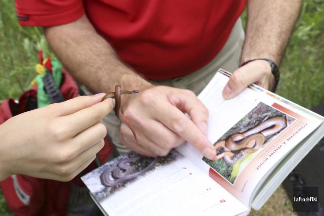 Les biologistes du Zoo de Granby, aidés d'autres... (Janick Marois, La Voix de l'Est)