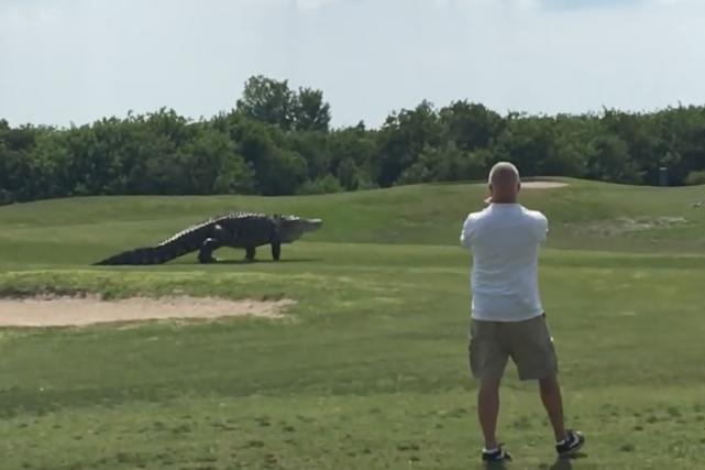 Un alligator géant a attiré l'attention des médias internationaux après que des... (Image tirée d'une vidéo)