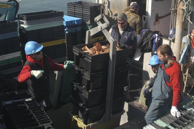 Un débarquement de crabes à Paspébiac, pour l'usine... (Collaboration spéciale Gilles Gagné)