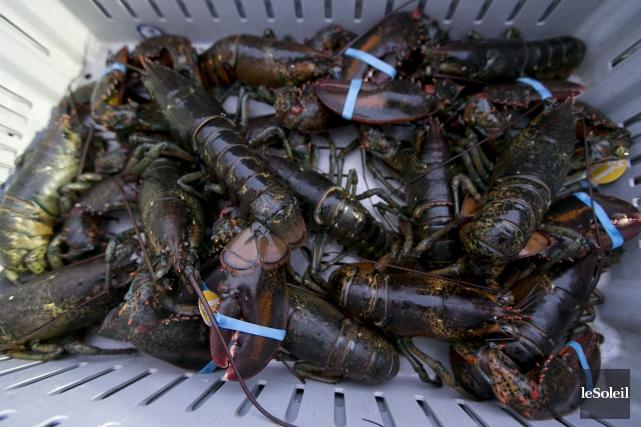 Les Îles-de-la-Madeleine comptent 325 bateaux de pêche au... (Photothèque Le Soleil)