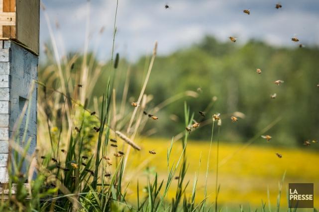 La valeur d'une ruche est à son apogée... (PHOTO OLIVIER PONTBRIAND, ARCHIVES LA PRESSE)
