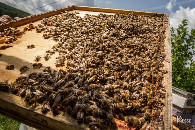L'enquête sur le miel démontre que parmi les... (Archives, La Presse)