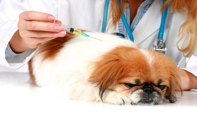 Il y a quelques années une enquête auprès de 10établissement vétérinaires à... (Photos.com)