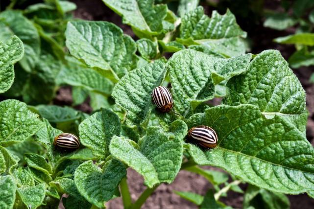On peut régler presque tous les problèmes d'insectes,... (Photos 123rf)